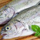 Fisch und vegetarische Ernährung reduzieren das Risiko von Darmkrebs